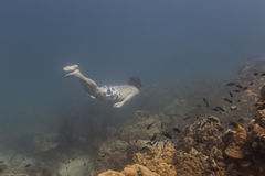Freedivng all'isola di Kood Fotografia Stock Libera da Diritti