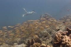 Freedivng in Kood-Insel Stockbilder