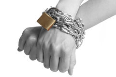 Freedom. Human hands are bond with a chain and a padlock -isolated on a white background Stock Images