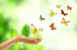Freedom. Concept with woman hand and butterflies flying out, symbolize freedom royalty free stock images