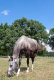 Of freedom. Shoot horses near my city Stock Photo