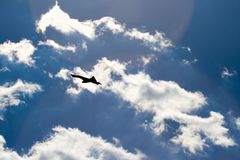 Freedom. Concept, bird silhouette on the bright sky Stock Photo
