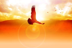 Freedom. Silhouette illustration of an eagle flying on sunrise Stock Photo