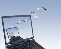 Freedom. Computer generated image made by me using my own photographs. Seagulls flying out of the laptop stock photos