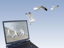 Freedom. Computer generated image made by me using my own photographs. Seagulls flying out of the laptop stock images