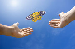 Freedom. Butterfly freedom concept photo with blue sky and light rays Royalty Free Stock Image
