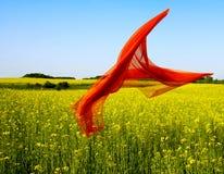 Free Freedom Stock Image - 3542771