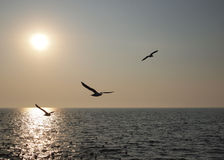 Freedom. Flock of birds look freedom Royalty Free Stock Images