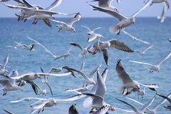 Freedom. Group of seagull flying Royalty Free Stock Photography