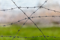 Freedom behind barbwire Stock Images