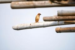 Freedom bird Stock Image