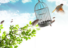 Freedom. The bird who is taking off from a cage on freedom stock photo