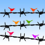 Freedom birds. Concept for freedom and liberty (free as a bird Royalty Free Stock Photo