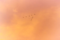 Freedom. Birds flying in the sky ,sunset and birds silhouette background Stock Photos