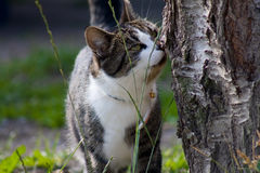 Freedom Cat. Cat being outdoors and exploring its surroundings Royalty Free Stock Image