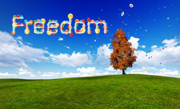 Freedom concept of balloons Royalty Free Stock Photography