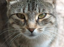 Freedom for Felines. Photo of a Feline Freedom Freewill Vision stock photo