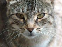 Freedom for Felines. Photo of a Feline Stock Photo
