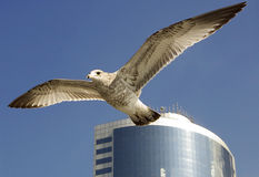 Freedom Flight Royalty Free Stock Photo