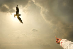Freedom of flying seagull sunset Royalty Free Stock Photo