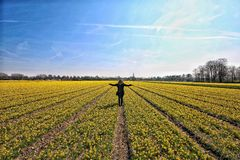 Freedom girl with open wide arms in dutch landscape flowerfield narcisses. Woman standing in yellow narcis flower field with her arms spread wide open Royalty Free Stock Photos