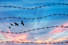 Freedom and human rights concept. silhouette of free bird flying in the sky behind barbed wire with sunset background.  stock photography