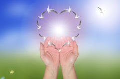 Freedom love in your hand Royalty Free Stock Photo