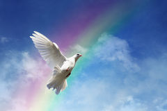 Freedom, peace and spirituality. White dove against clouds and rainbow concept for freedom, peace and spirituality Stock Photos