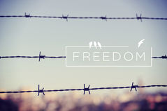 Freedom quote concept barbed wire background Stock Image