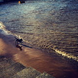 Freedom on the Thames, London. Shot of dog bounding along the River Thames in London with summer light Royalty Free Stock Photo