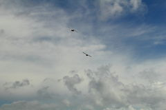 Freedom. Two birds toward the sky Stock Photography