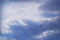 Freedom under skys. Two sea gull flying under sun rays Royalty Free Stock Photography