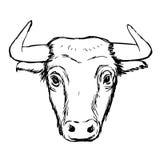Freehand иллюстрация эскиза быка Стоковые Фото