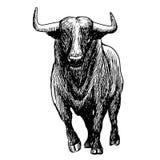 Freehand иллюстрация эскиза быка Стоковая Фотография