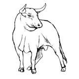 Freehand иллюстрация эскиза быка Стоковая Фотография RF