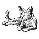 Freehand иллюстрация эскиза маленького кота Стоковые Изображения RF