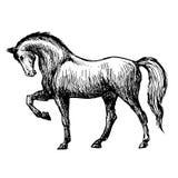 Freehand иллюстрация эскиза лошади Стоковые Фотографии RF