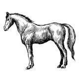 Freehand иллюстрация эскиза лошади Стоковые Фото