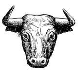 Freehand иллюстрация эскиза bul Стоковое Изображение RF