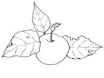 Freehand Clip Art, Drawing of an Apple with Leaves Royalty Free Stock Photos