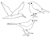 Freehand Clip Art of Three Birds. These are my original freehand line drawings of three birds Royalty Free Stock Images
