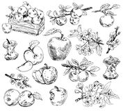Freehand drawing apples Royalty Free Stock Photos
