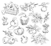 Freehand drawing apples Royalty Free Stock Photography