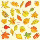 Freehand drawing autumn leaves items on a sheet of exercise book Royalty Free Stock Photos