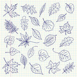 Freehand drawing autumn leaves items on a sheet of exercise book Stock Photo