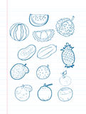 Freehand drawing fruit on a sheet. Freehand drawing fruit with blue pen on a sheet royalty free illustration