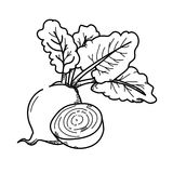 Freehand drawing illustration Beetroot. Stock Images
