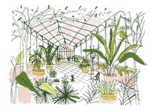 Freehand drawing of interior of tropical botanical garden full of cultivated plants with lush foliage. Sketch of vector illustration