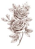 Freehand drawing rose 01 Stock Photos