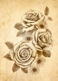 Freehand drawing rose 02 Stock Images